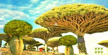 Лесной питомник