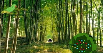 Тот самый лес из сериала