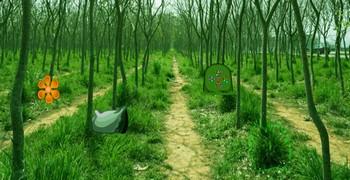 Лес королевских лягушек