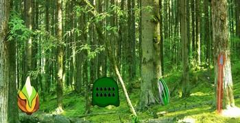 Тропический вечнозелёный лес