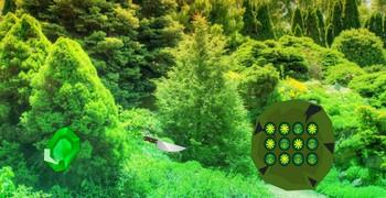 Как выйти из елового леса