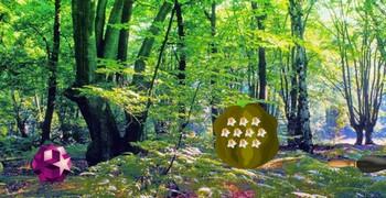 Натурная земля деревянная