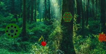 Кошмарики дождливого джунгля