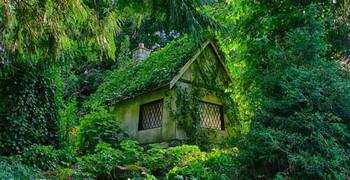 Как найти дом в лесу
