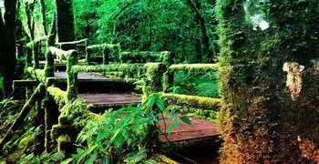 Приключения в холодном лесу